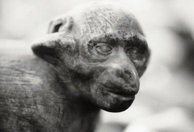 FitzGerald-Ape